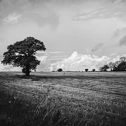 Black and white photo of a lone tree in a field with clouds in the sky behind